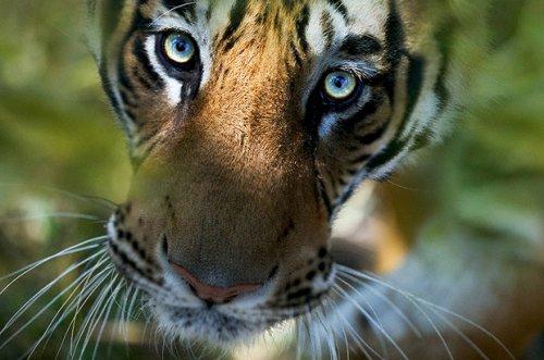 Удивительные фотографии животных от Стива Блума.