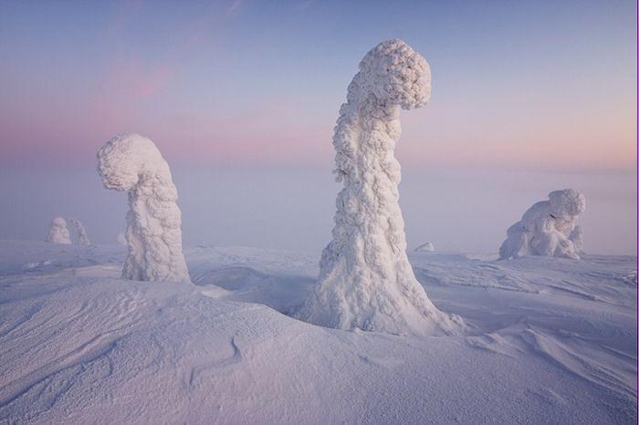 Замёрзшие деревья как апофеоз зимы в